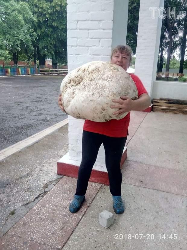 Великий гриб Київщина рекорди