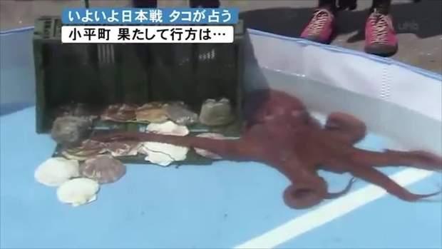 осьминог япония футбол
