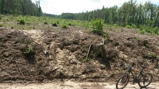 Те, що залишилося від лісу під Києвом