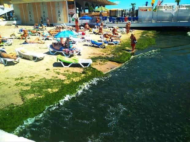 Одесса, водорости, пляж, отдых