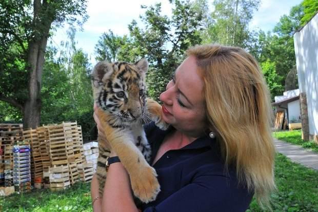 Маленьке тигреня у Луцьку