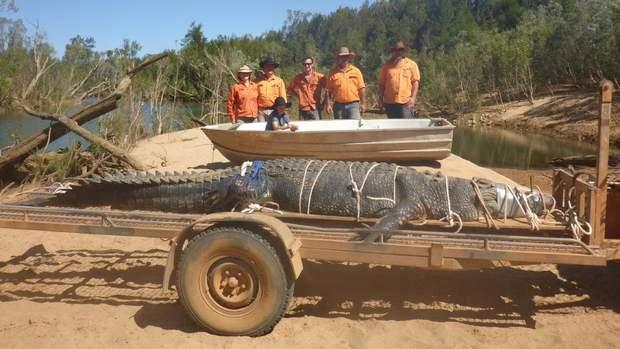 крокодил Австралія