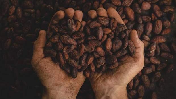 Какао-боби містять речовину теобромін, яка може бути токсичною, якщо з'їсти забагато шоколаду