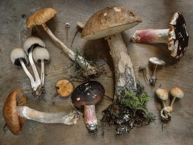 Отруйні та їстівні гриби
