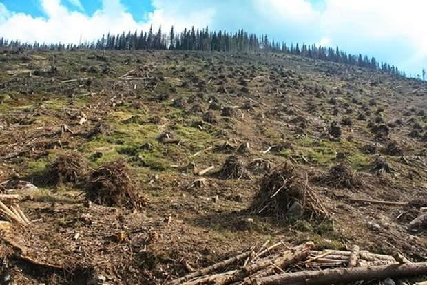 Вирубка лісів у Словаччині