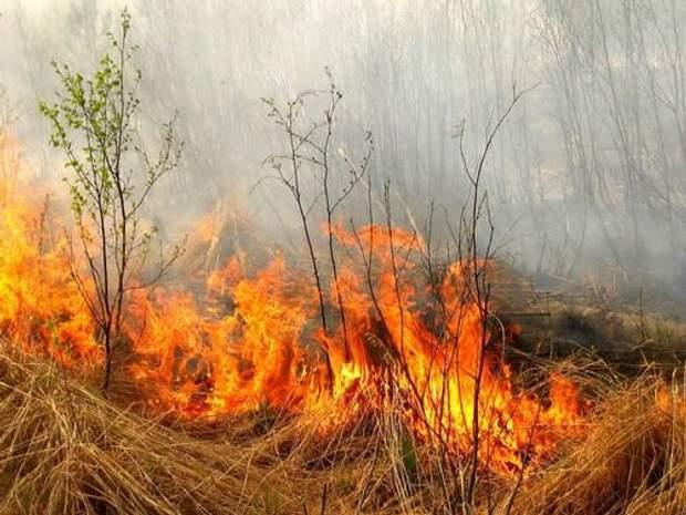 Чим небезпечний дим від спалювання стерні