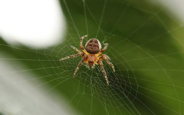 Що не можна робити після укусу павука