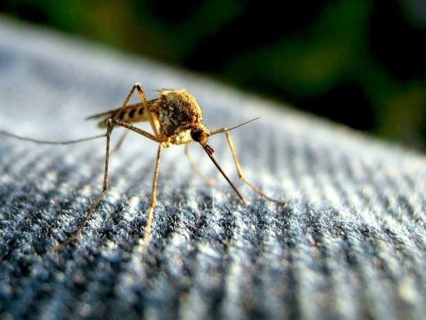 Чим протирати укус комарів