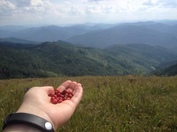 гори Карпати Парашка ягоди брусниця