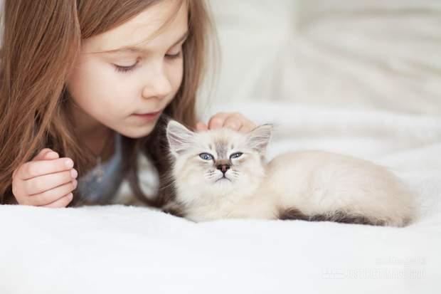 Коти знімають напругу