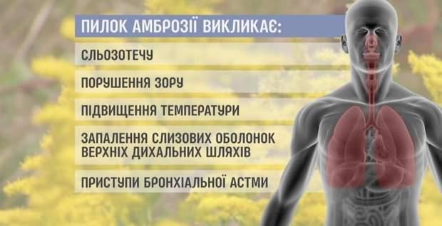 алергія амброзія