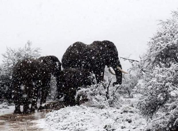 сніг, африка,