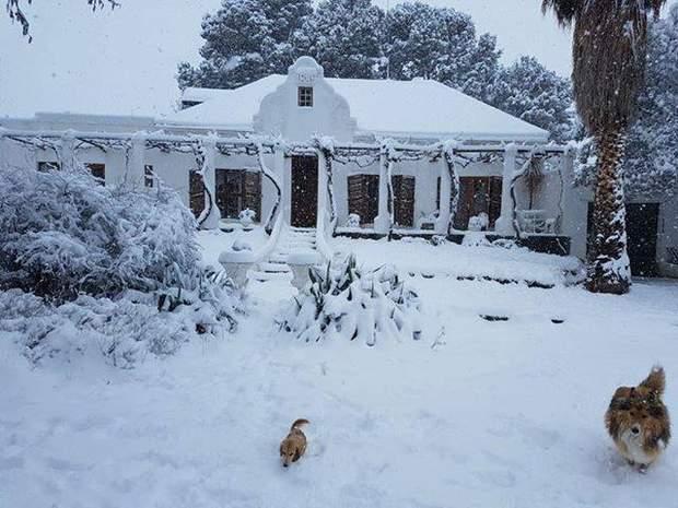 африка, сніг