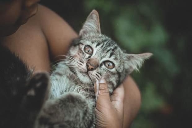 Через інфікованого кота можна підчепити туляремію