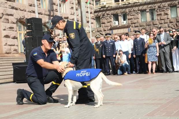 собаки дснс рятувальники