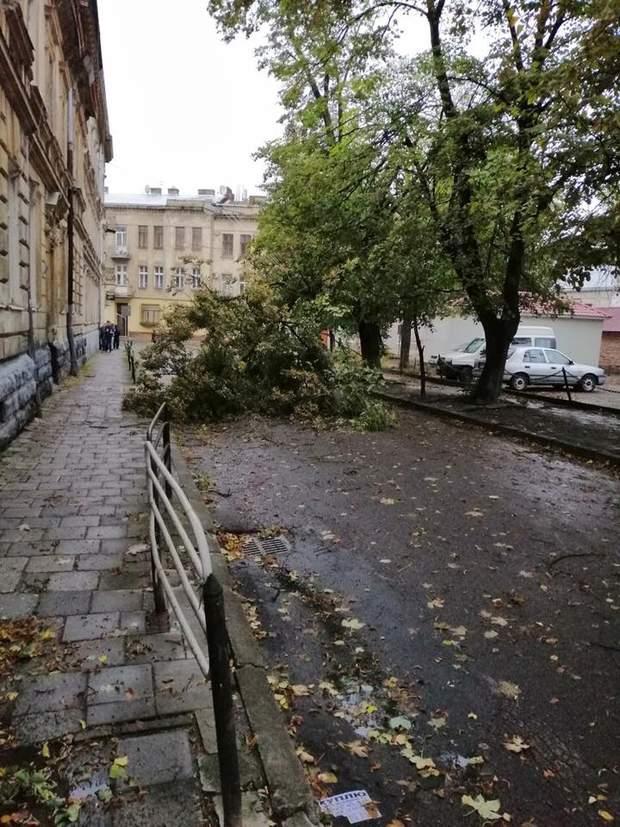 В Україну прийшла осінь: як у Львові лютував вітер, а Київ стояв у масштабних заторах (фото, відео)