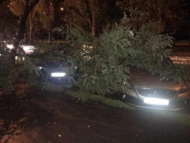 Негода Миколаїв дощ погода дерева авто