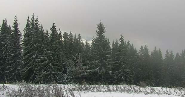 Карпати сніг перший сніг Буковель