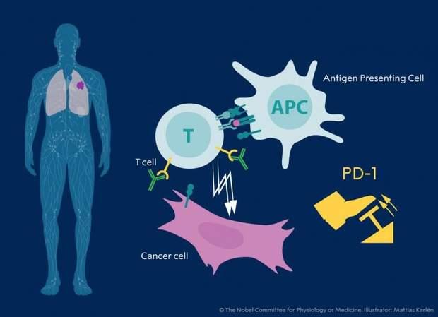 Білки, рак, Хонжо, Еллісон, лікування, наука, Нобелівська премія, медицина