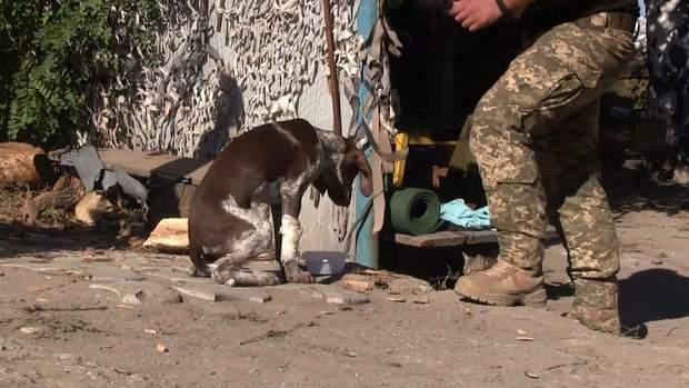 війна на донбасі врятування собак