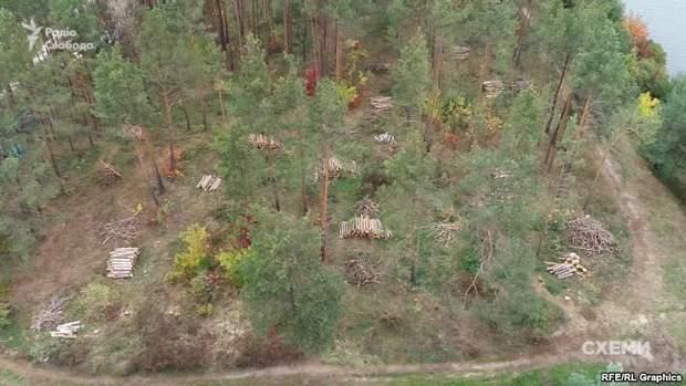вирубка дерев злочевський