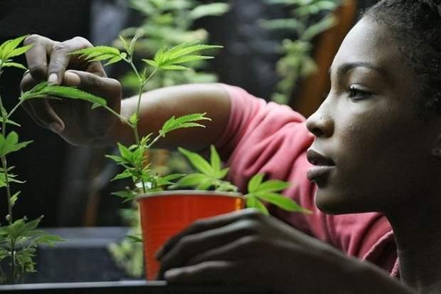 Тепер в Канаді можна вирощувати марихуану