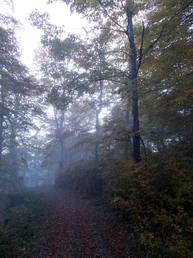 Карпати осінь