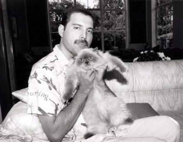 Фредді Мерк'юрі мав шістьох котів