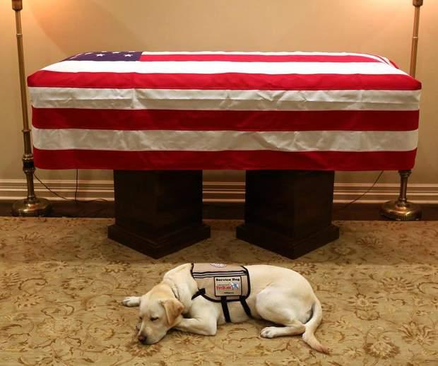 Собака Джорджа Буша-старшого сумувала біля його труни