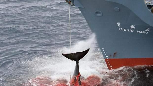 У 1920 та 1930 роках існував активний китобійний промисел