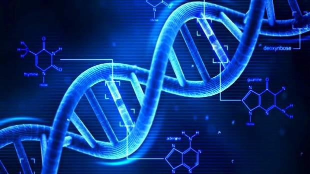 Вчені виявили ген ICOSLG