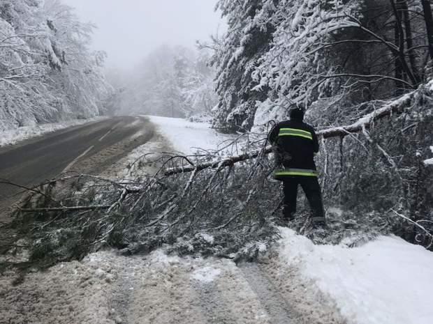 Закарпаття негода погода снігопад впали дерева