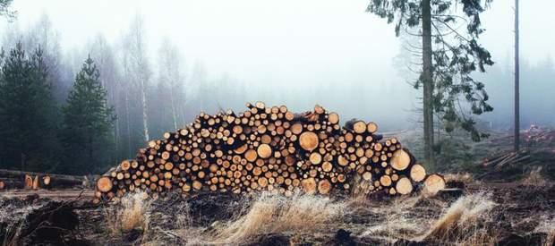 Можливе об'єктивне збільшення норми заготівлі деревини