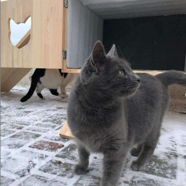 котопункт Одеса будинок для котів Лузановка