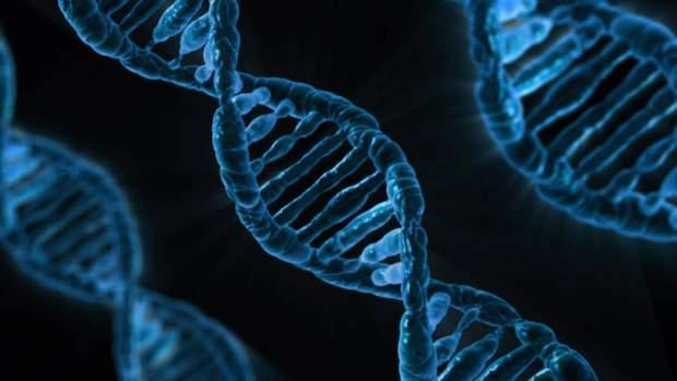 ДНК-тест буде аналізувати ділянки геному людини