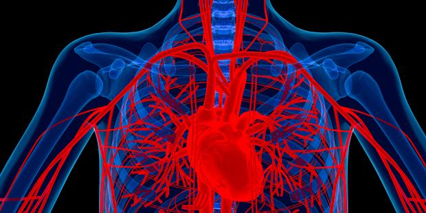 Вчені вперше виростили кровоносні судини людини