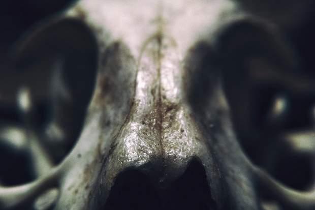 У кістках людей містяться кровоносні судини