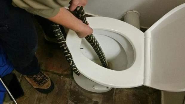 Змія від спеки сховалася в унітазі