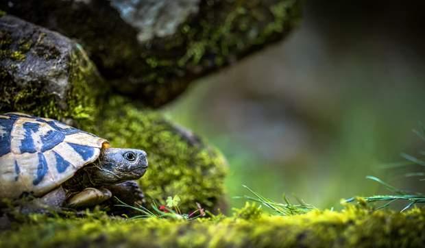 Вчені знайшли рак у стародавньої черепахи