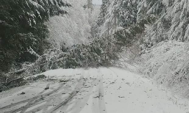 вашингтон, снігопад, надзвичайний стан