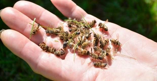 В мире масово гибнут насекомые