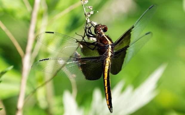 Тропические насекомые