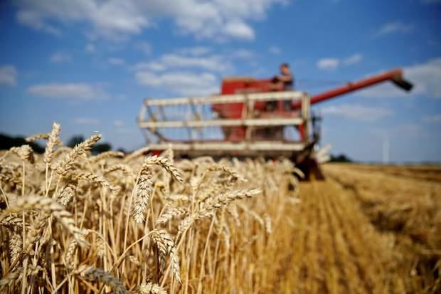 В Украине мораторий на продажу земли действует с 2001 года
