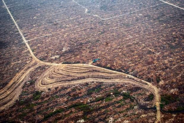 Спалені тропічні ліси