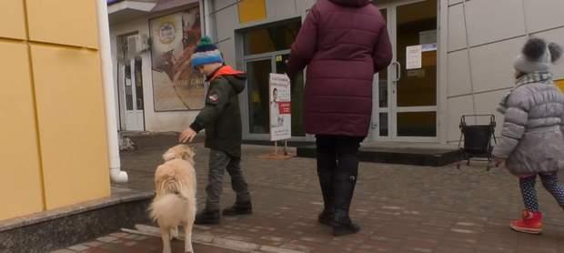 Отруєння собак на Черкащині