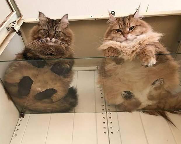 коти меми