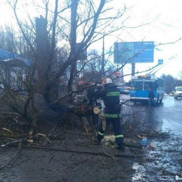 Дерево впало на дитину у Вінниці