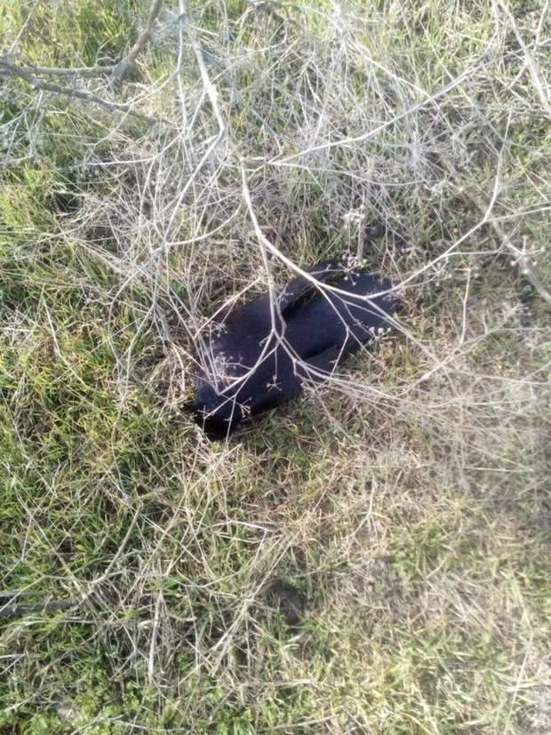 Запоріжжя птахи гинуть Кирилівка