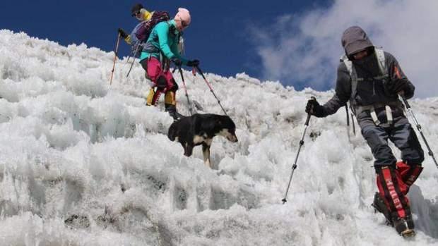 собака Непал гори Гімалаї