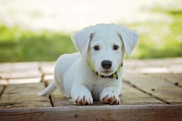 Собаки епілепсія